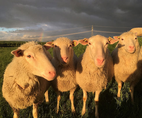 moutons-soleil copy.jpg