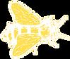 abeille-blanche-sketch.png