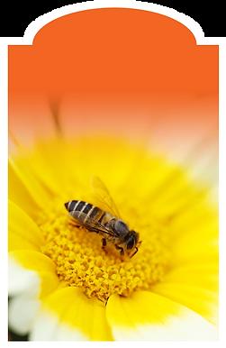 Les abeilles Cantons-de-l'Est