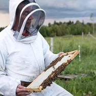 Un apiculteur accrédité vous fait connaître le monde des abeilles.
