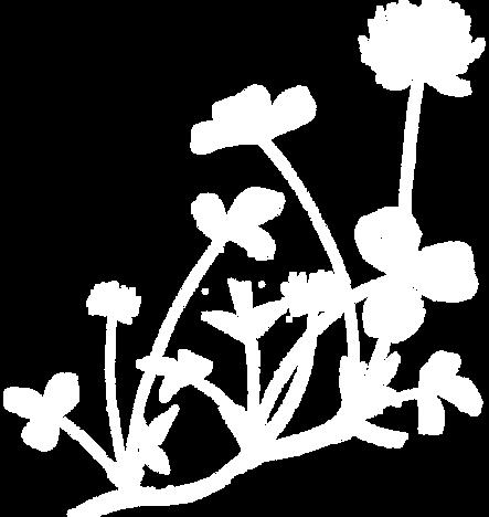 trefle-blanc-02.png