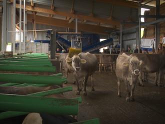 Agri Team Winznau - Flexible Arbeitszeiten im Milchviehstall