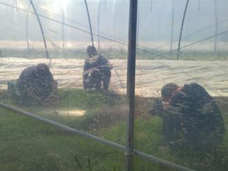 Die Gemüsemacher im April