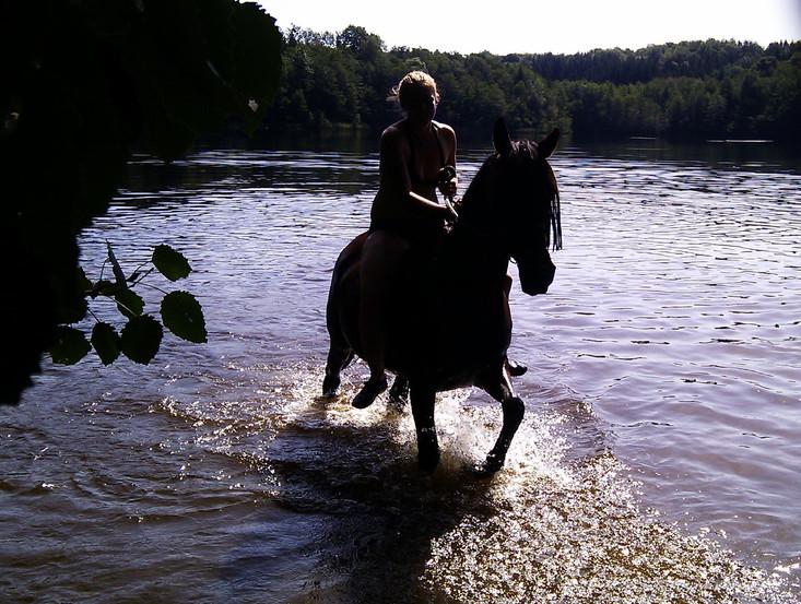 Pferd im Etang