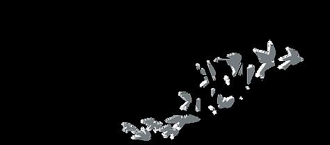 Tyler Graham Studio | Logo