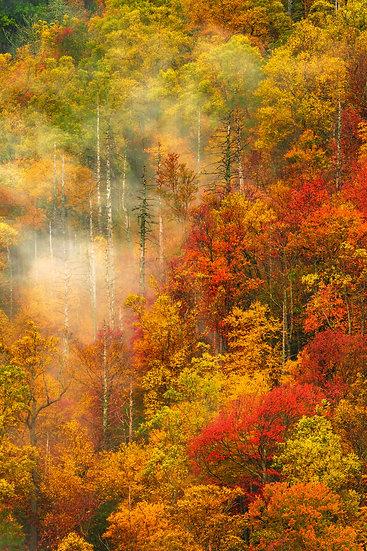 Smoky Mountain - Fall & Fog