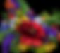 Transparent Sunnyview Logo 1b.png