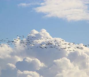 bird-migration-4023947_1920.jpg