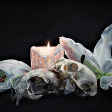 Cat Skulls & Lilies, By Martin Woodhead