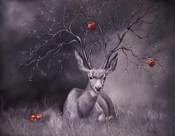 Kyra Wilson, Seedling