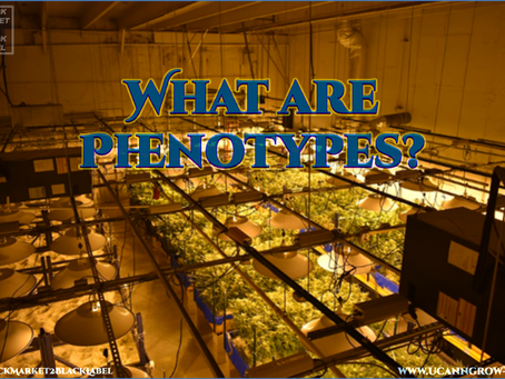 Phenotype Hunting: What To Look For
