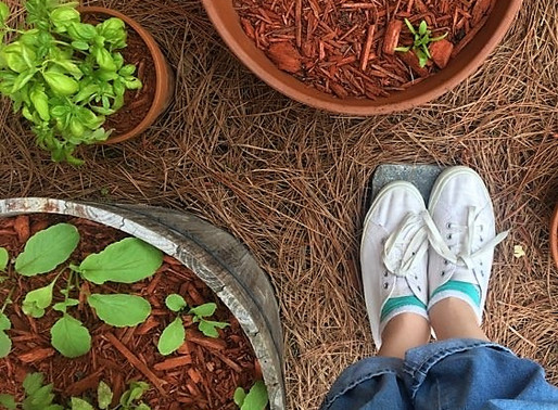 Podcast #2:The Quarantine Garden Phenomenon + how to start one