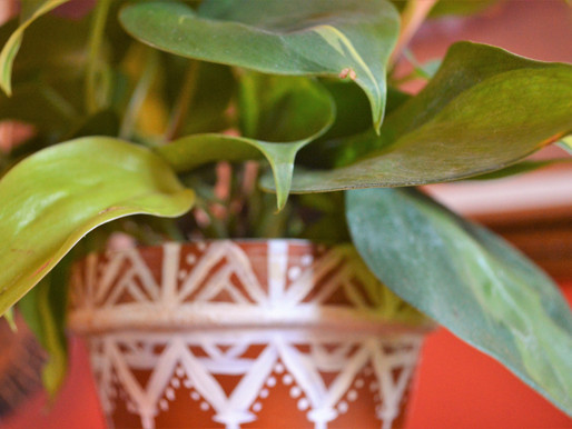 New Leaf: self-care lessons from my Philodendron