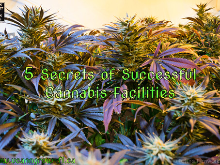 Know Before You Grow: 5 Secrets of Successful Cannabis Facilities