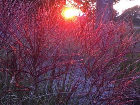 Seedheads and Sunlight