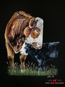 Mothers Love simmental cow
