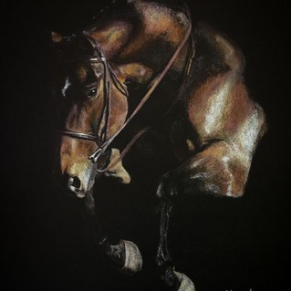 Theo equine art by Red Dog Imagery.jpg