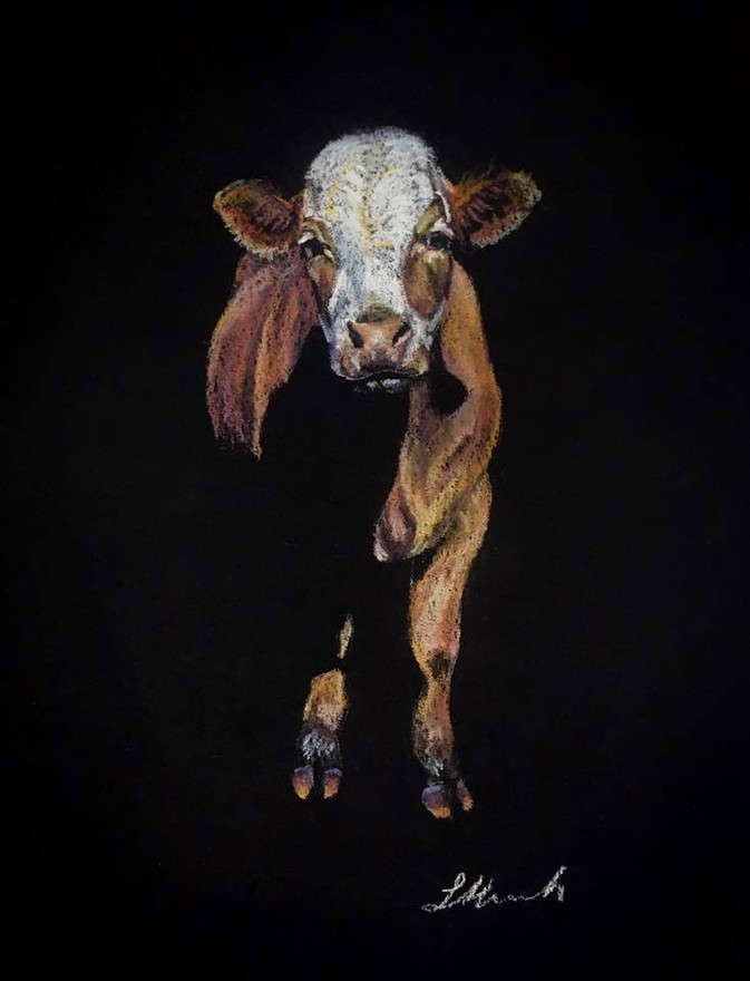 Cow portrait Lucile by Red Dog Imagery.j