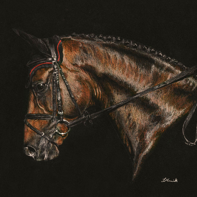 Quiwi Dream by equine artist, Libby Hume