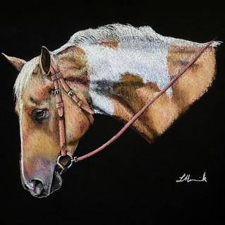 Palomino Paint