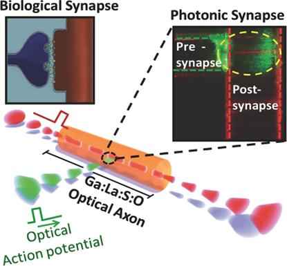 17. Amorphous metal-sulphide microfibers enable photonic synapses for brain-like computing