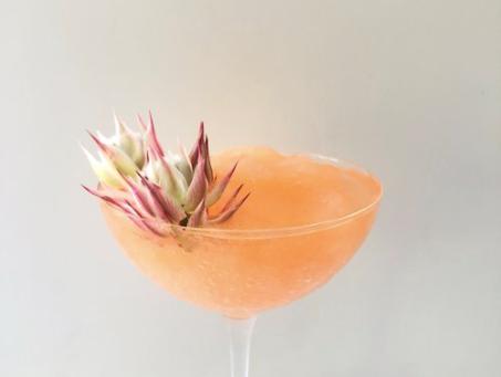 August Cocktails!