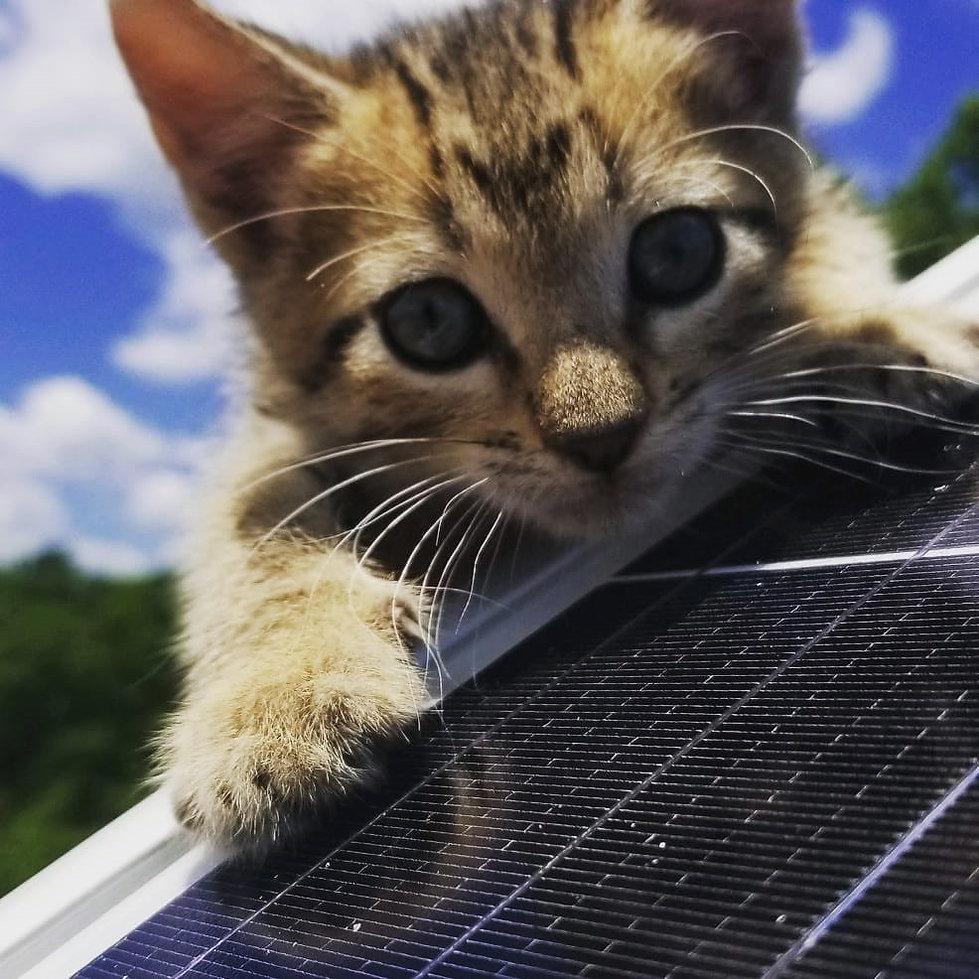 kitty pic.jpg