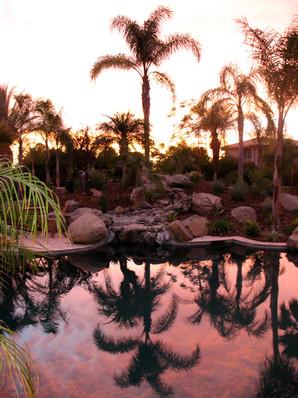 Pool Sunsets