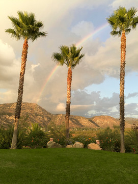 Front Yard Palms and Rainbow