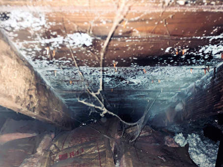 Attic Mold: Is your home healthy?