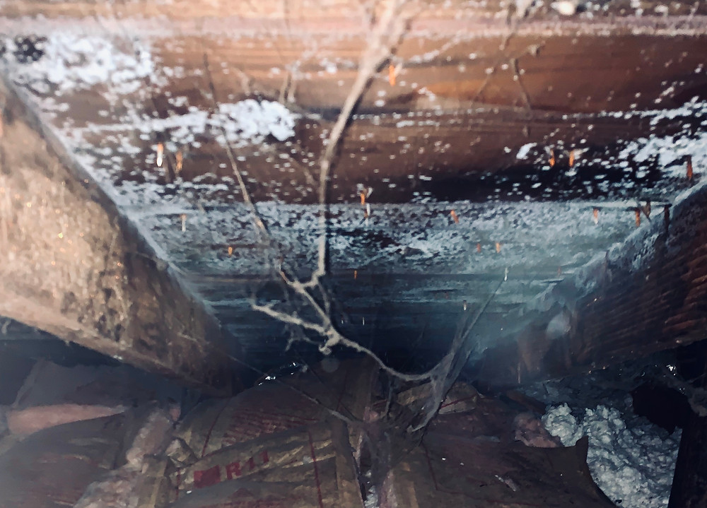 mold in the attic due to bad roof