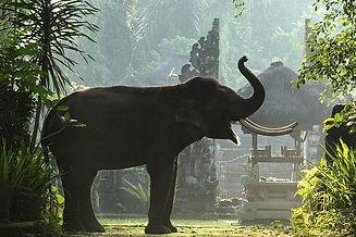 elephant sancuary.jpg