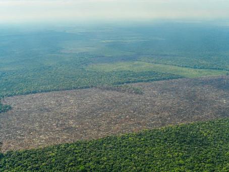 La Amazonia perdió 2,3 millones de hectáreas en 2020, su tercer peor registro