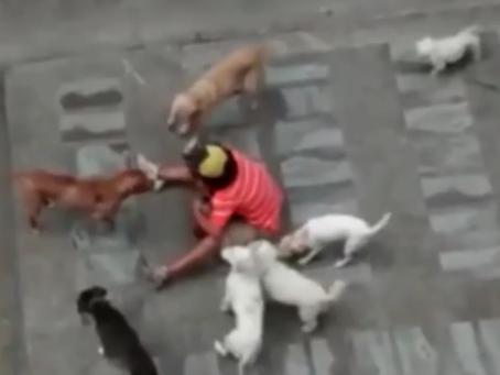 En libertad hombre que supuestamente maltrató y mató a varios perros en Pasto