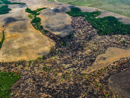 Pérdida de bosque se incrementó 18 % en el mundo en el 2020