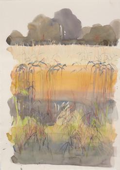 Wheat field, Brittany 2