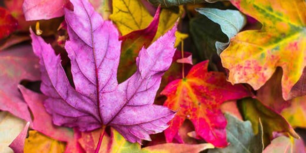 Autumn Secrets for Longevity