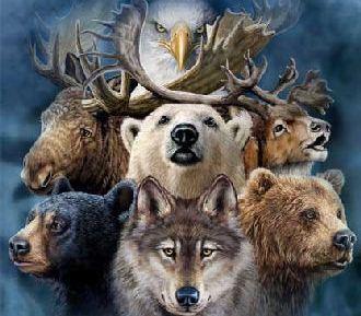 Xamanismo - Animais de Poder