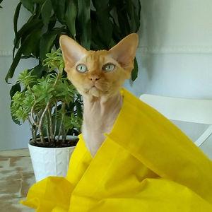 warry giallo.jpg