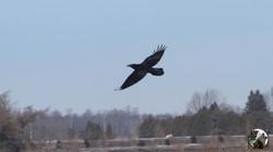NHB Craven taking flight