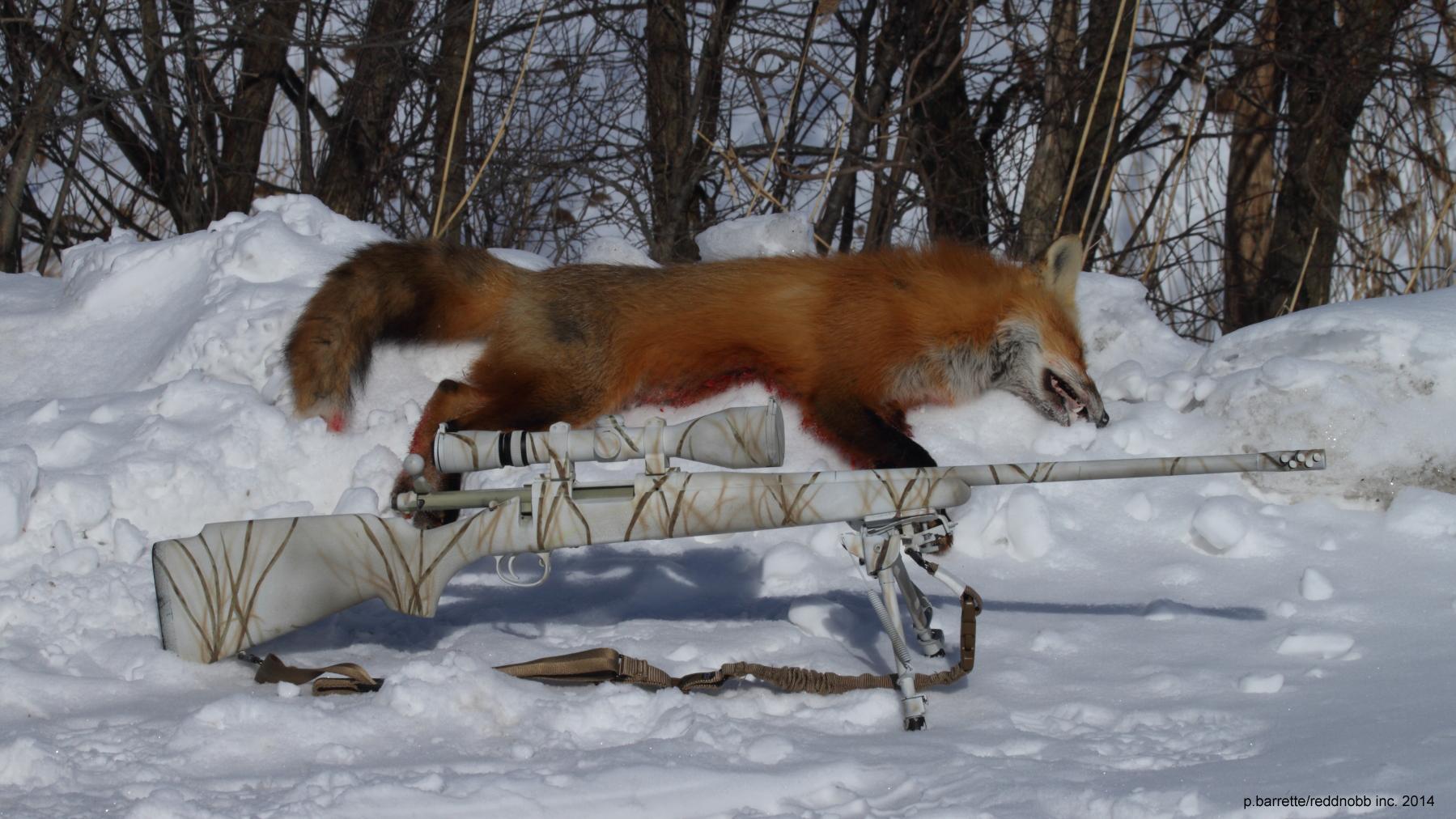380 yds fox