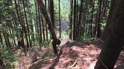 sasquatch view