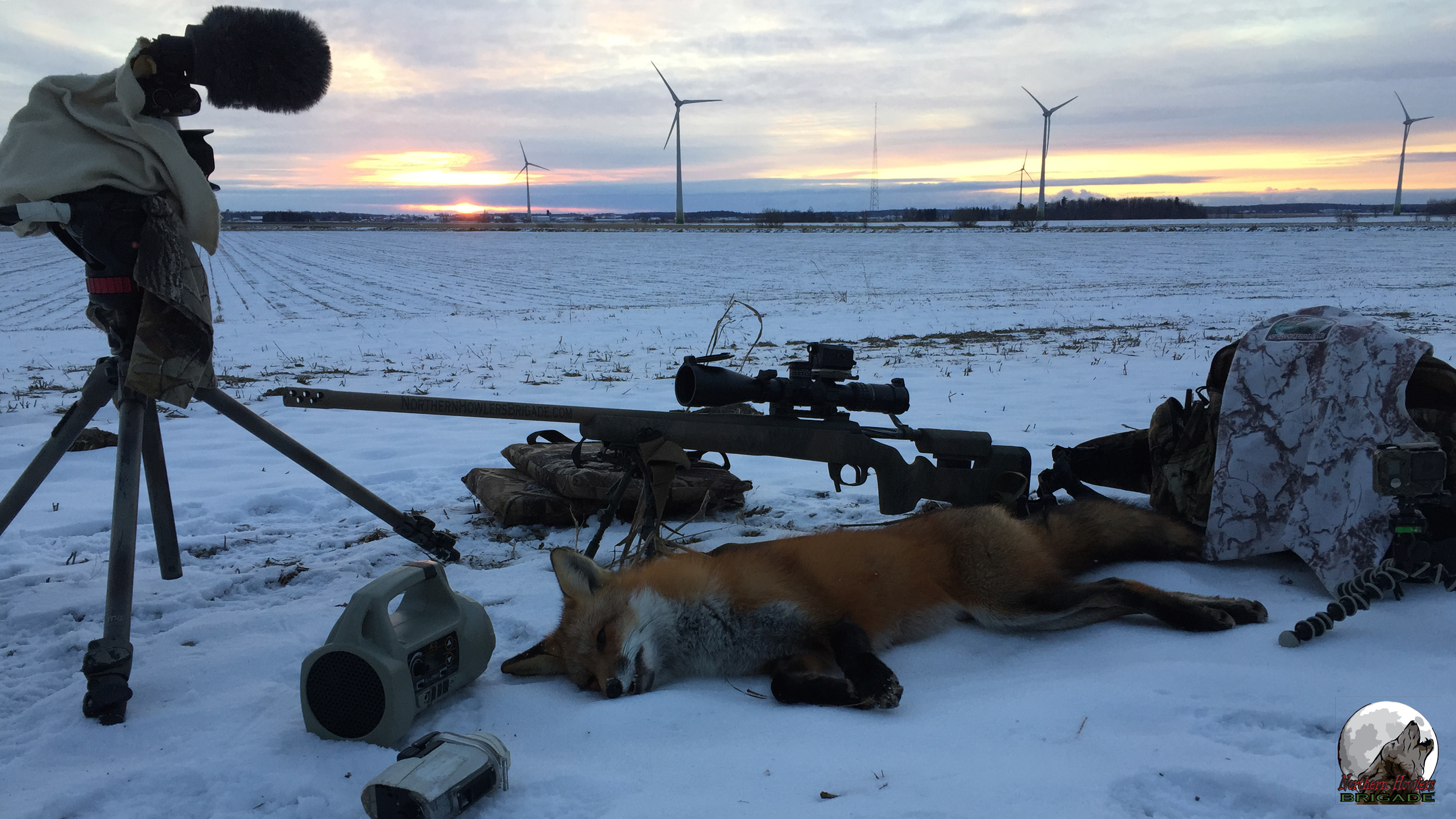 NHB Red Fox shot with a 22 Creedmoor