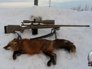 Mic's first fox.