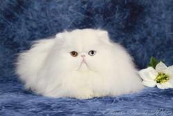 Kitten of the Year