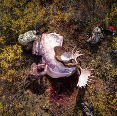 moose-0031.jpg