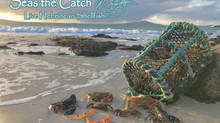 Welcome to Seas the Catch!