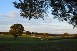 Places of Puglia | the sun setting upon the vast countryside of the Valle d'Itria