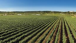 Culture & Tradition in Puglia | I Pastini, wine culture in the d'Itria Valley