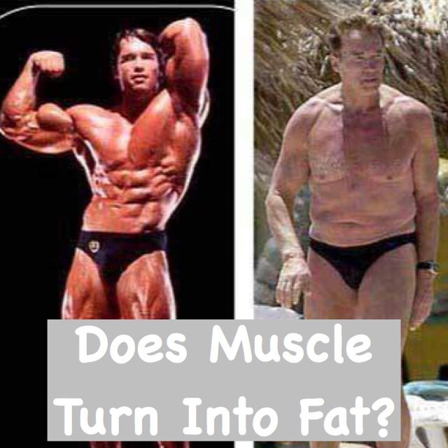 muscle turn to fat?
